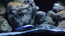 Besatz im Aquarium Malawi (nur noch Beispiel)
