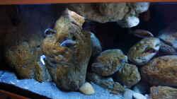 Aquarium Malawi (nur noch Beispiel)