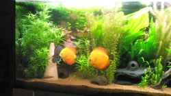 Aquarium Amazonas City
