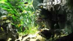 Update 07.01.2012 Abdunklung mit Folie bei vollem Tageslicht