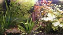 Pflanzen im Aquarium Wilder Mix...aber mir gefällts