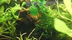 Besatz im Aquarium Es hängt