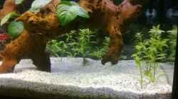Aquarium Mein noch wachsendes Becken