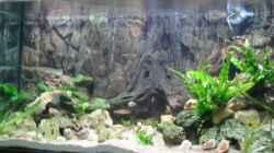 Aquarium Becken 2090