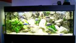 Aquarium Becken 21
