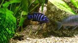 Besatz im Aquarium Becken 21