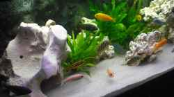 Aquarium malawi.mario 450l Becken