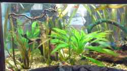 Aquarium Clarkii Wohndschungel