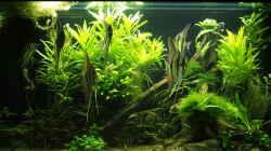 Aquarium Aquarium mit Altums