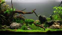 Aquarium Becken 21581