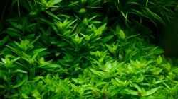 Pflanzen im Aquarium Cube 40x40x40