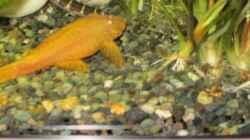 Besatz im Aquarium Juwel Vision 450