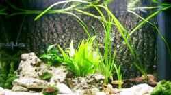 Aquarium Becken 218