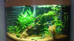 Aquarium Aqua Asia II