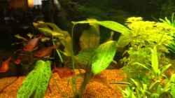Besatz im Aquarium GreenParadise=)