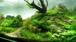 Aquarium Einst war das Chaos