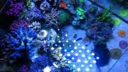 Dekoration im Aquarium SPS Riff