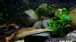 Dekoration im Aquarium Afrikas Stromschnellen