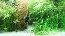 Aquarium 240 Liter Südamerika