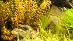 Pflanzen im Aquarium Tantris
