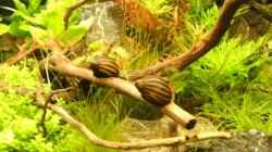 Besatz im Aquarium Tantris