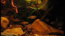 Meine kleinen Piranhas :)