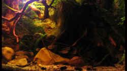 04.12.12 rechts im Bild Wasserähre, Mitte Crinum natans