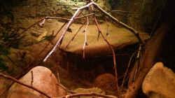 mittig, Zweige, Blätter und Steine liegen unaufgeräumt und natürlich