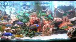Dekoration im Aquarium Becken 2211