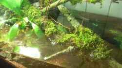 Wasserteil von oben