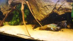 Dekoration im Aquarium Wohnzimmer Orinoco