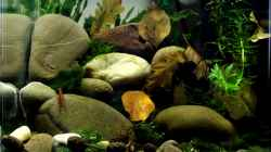 Aquarium pure nature