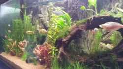 Aquarium Rainbow`s home (Nurnoch Beispiel)