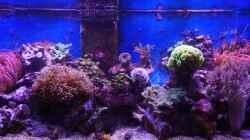 Aquarium Meerwasser 2010