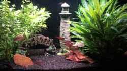 Aquarium Feierabendentspannung ;)