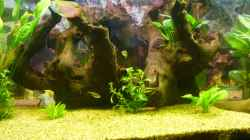 Dekoration im Aquarium Becken 22387