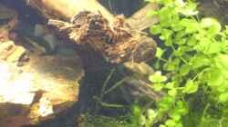 Pflanzen im Aquarium Krebs-Honeymoon Villa  ( Bora-Bora )
