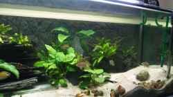 Aquarium Aestuarium Tanganicanum