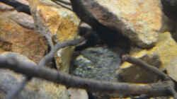 Aquarium African Dream / Nur noch Beispiel /