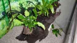 Wurzel bepflanzt