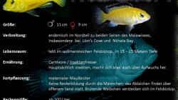 Labidochromis caeruleus Artentafel