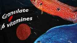 Das Aquatic Nature Futter Granulat für meine Malawis.