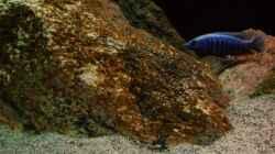 Dekoration im Aquarium ZU VERKAUFEN OPEN FREE TERRITORY