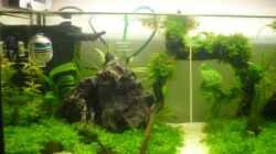 Pflanzen im Aquarium Wilderstrand