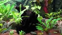 Aquarien Mit Motivruckwand Juwel Cliff