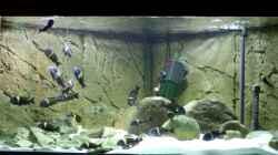 Besatz im Aquarium Tropheus 1  Duboisi - nur noch als Beispiel