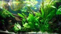 Aquarium Asien