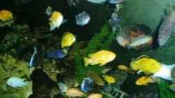 Dekoration im Aquarium Becken 22860 (nur noch als Beispiel)