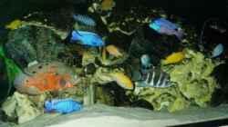 Technik im Aquarium Becken 22860 (nur noch als Beispiel)