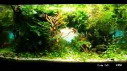 Aquarium Prinzessin Lillyfish